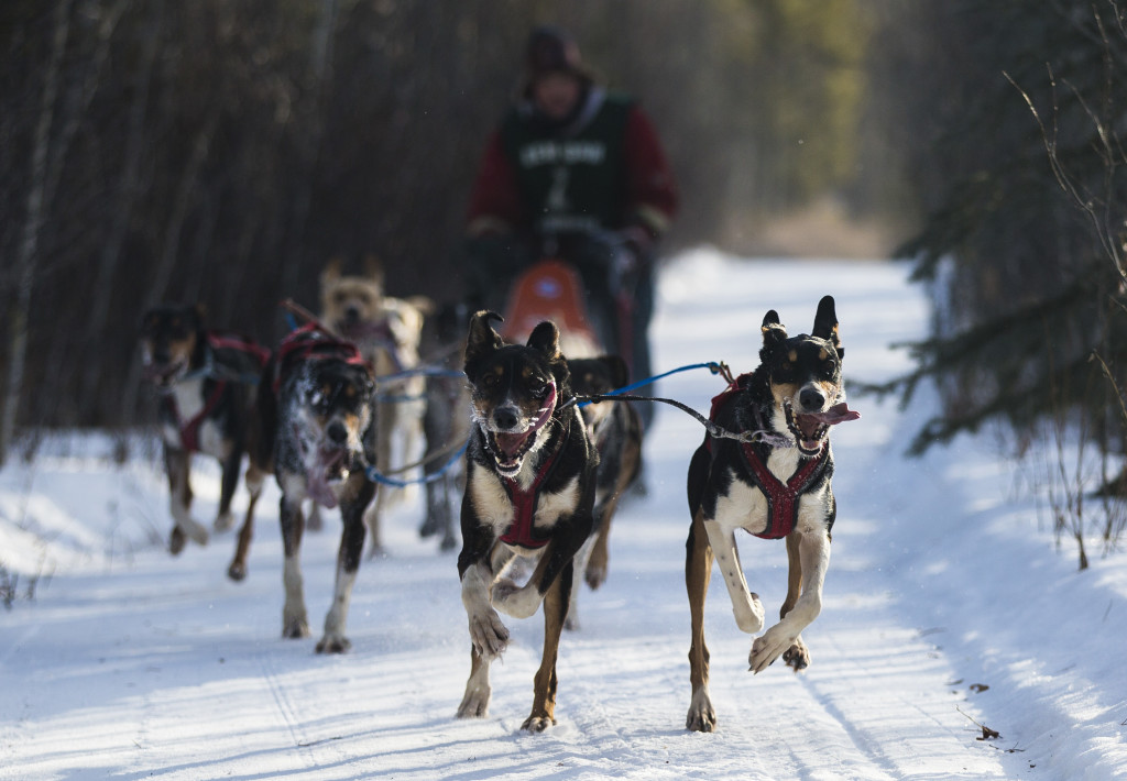 Armin Johnson races during the 10-dog-10-mile sled event at the Babe Southwick Memorial race on Feb.18, 2017 outside Whitehorse. Photo by Marissa Tiel