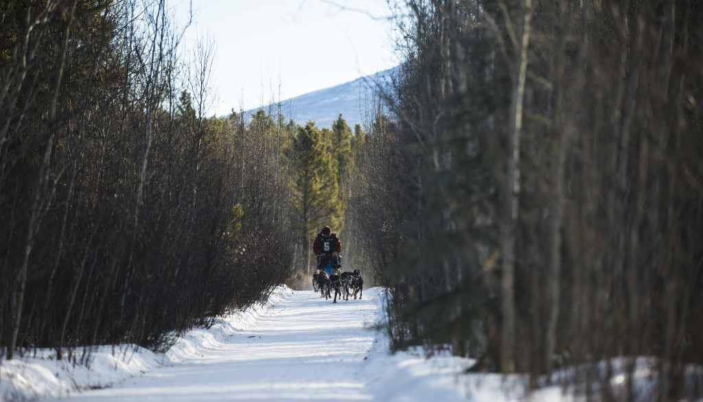 Ron Peebles races during the 10-dog-10-mile sled event at the Babe Southwick Memorial race on Feb.18, 2017 outside Whitehorse. Photo by Marissa Tiel
